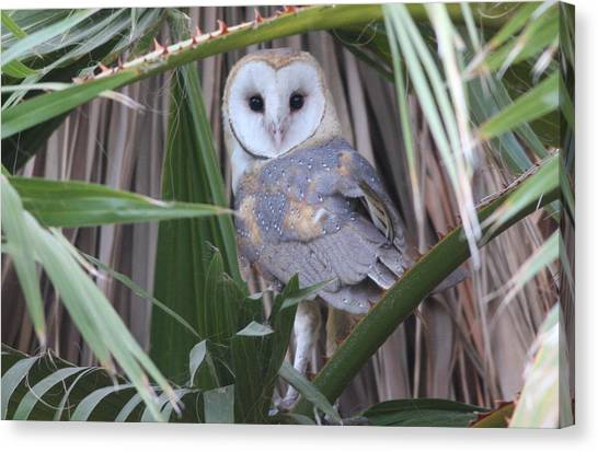 Barn Owl Canvas Print by Joe Sweeney