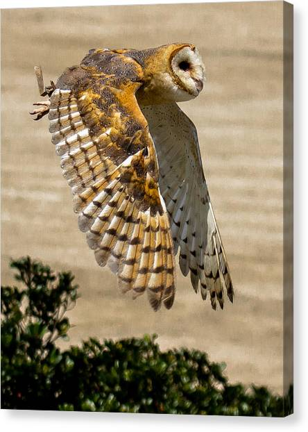 Canvas Print featuring the photograph Barn Owl by Robert L Jackson