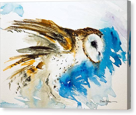 Da145 Barn Owl Ruffled Daniel Adams Canvas Print