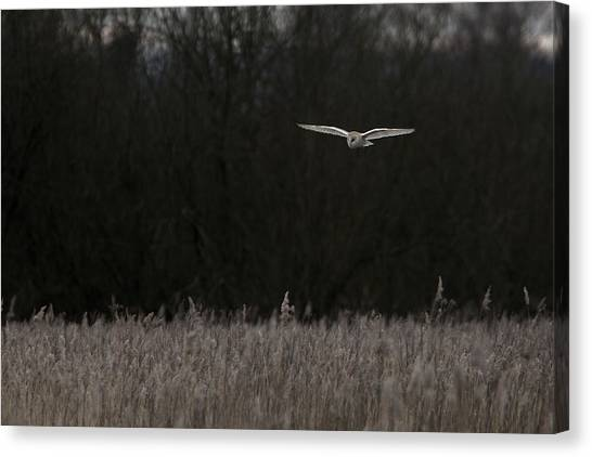 Barn Owl The Silent Hunter Canvas Print