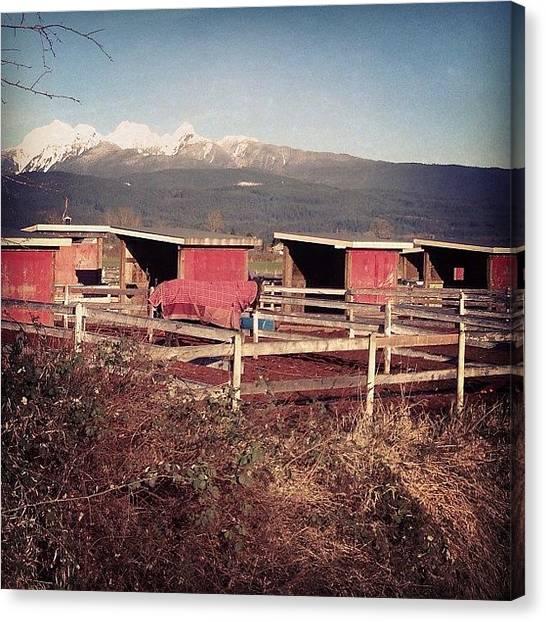 Horse Farms Canvas Print - Barn Stalls by Lena BelizeanTropics dot com