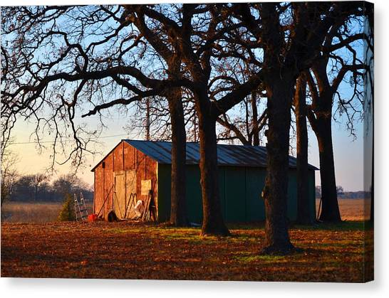 Barn Under Oak Trees Canvas Print