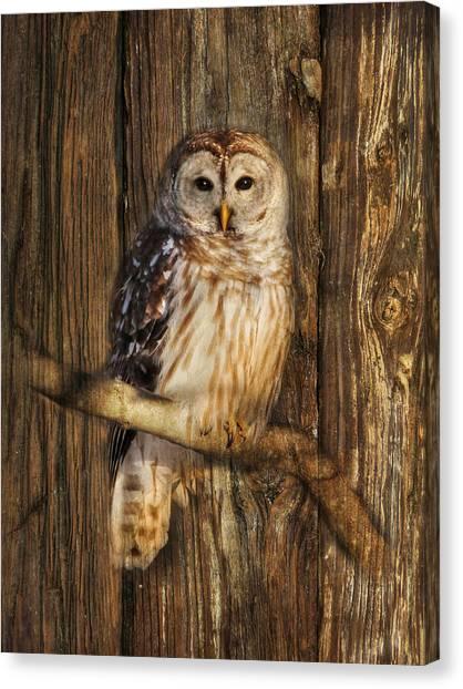 Barred Owl 1 Canvas Print