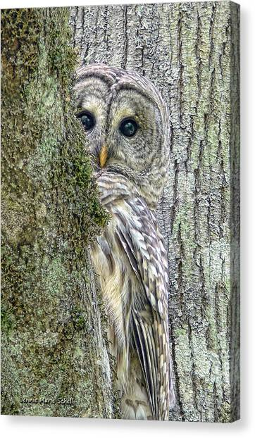 Bar Canvas Print - Barred Owl Peek A Boo by Jennie Marie Schell