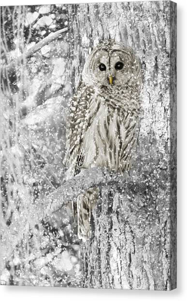 Winter Forest Canvas Print - Barred Owl Snowy Day In The Forest by Jennie Marie Schell