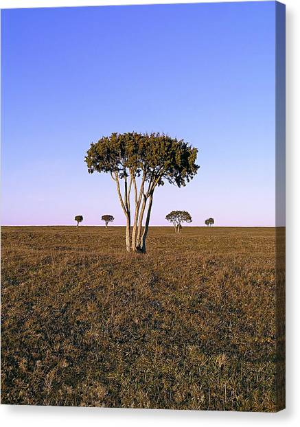 Barren Tree Canvas Print