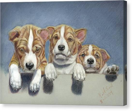Basenji Puppies Canvas Print