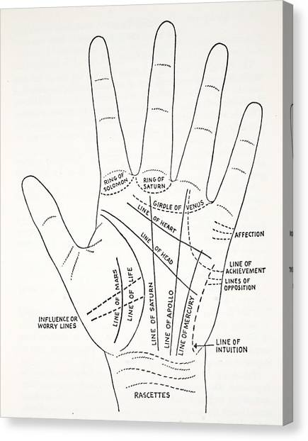 Hand Canvas Print - Basic Lines And Lesser Lines Of The Hand by English School