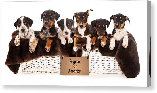 Rottweilers Canvas Print - Basket Of Mixed Breed Puppies by Susan Schmitz