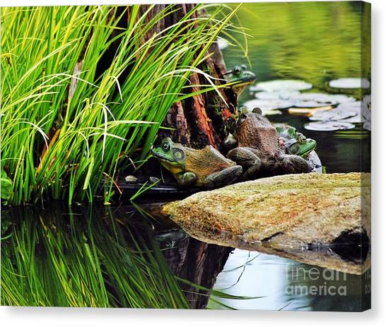 Basking Bullfrogs Canvas Print