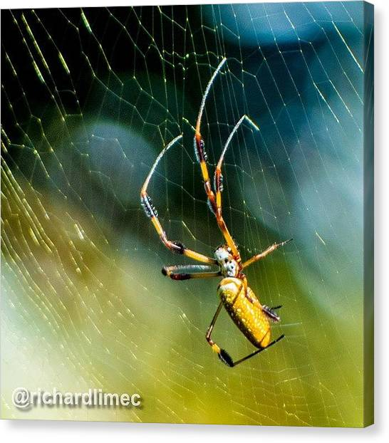 Spider Web Canvas Print - Basking In The Morning Sun.  #sunlight by Richard Lim