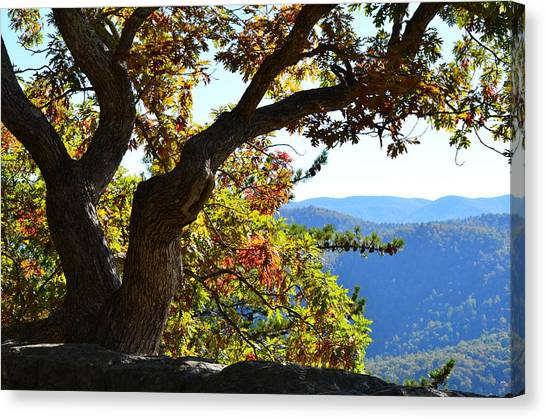 Basking In The Sunlight Canvas Print