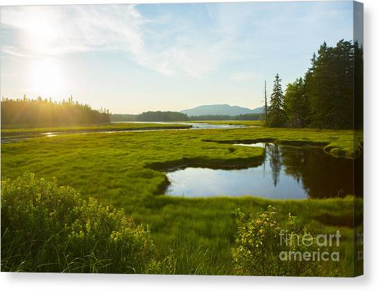 Marshes Canvas Print - Bass Harbor Marsh At Dusk by Diane Diederich