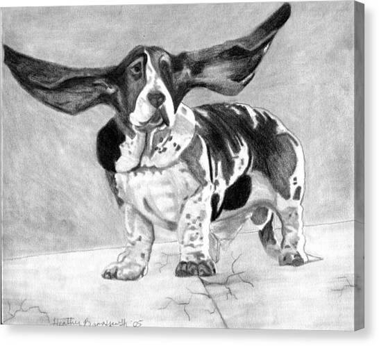 Basset Artesien Normand Dog Portrait Canvas Print by Olde Time  Mercantile