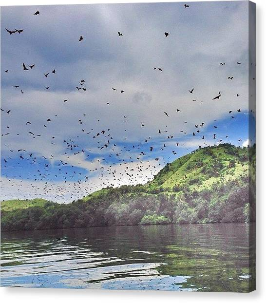 Bat Canvas Print - #bat #hill #17 #islands #riung #flores by Mieke Cb