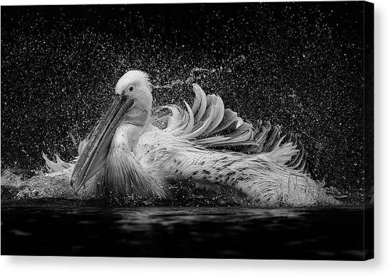 Pelican Canvas Print - Bath by C.s. Tjandra