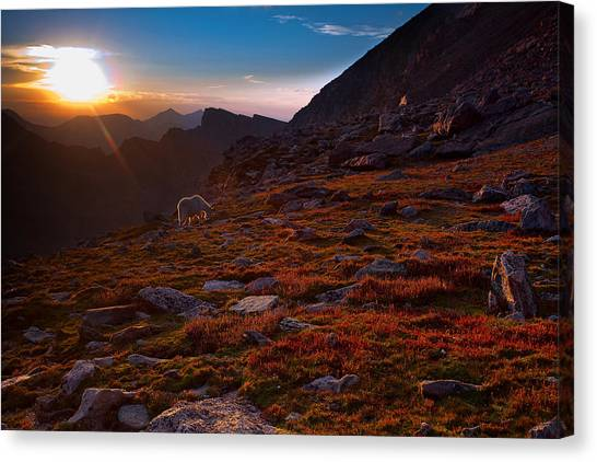 Bathing In Last Light Canvas Print