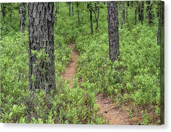 Batona Trail II Canvas Print
