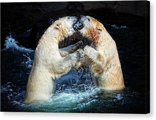 Polar Bears Canvas Print - Battle & Kisses .... by Antje Wenner-braun