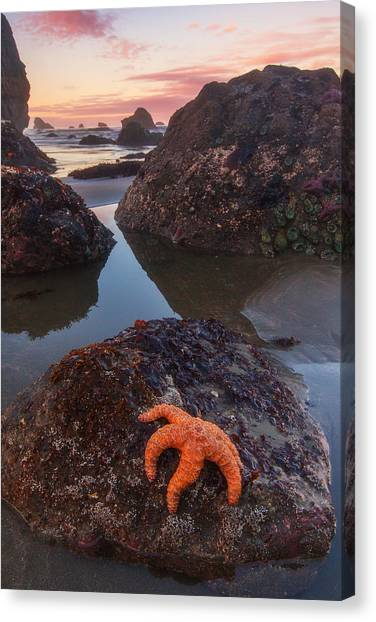 Starfish Canvas Print - Battle Rock Sunrise by Darren  White