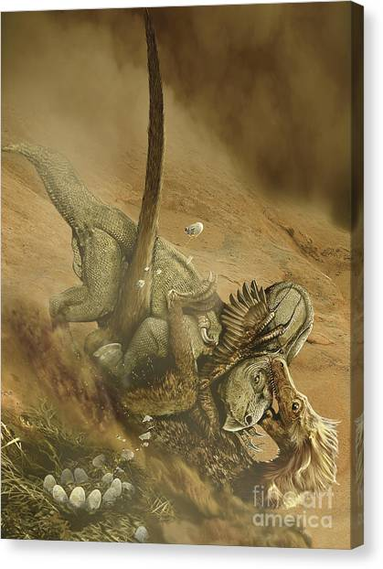 Velociraptor Canvas Print - Battle Scene Between A Velociraptor by Jan Sovak