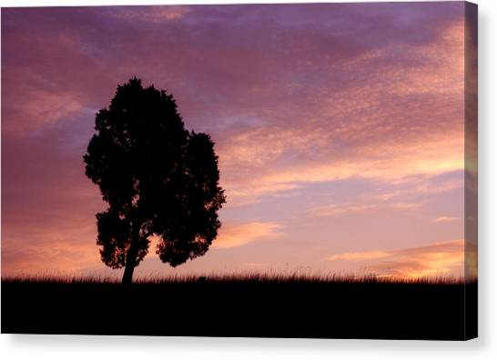 Battlefield Tree Canvas Print