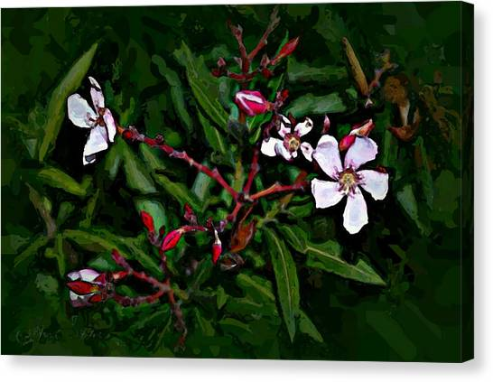 Bay Beauty Canvas Print