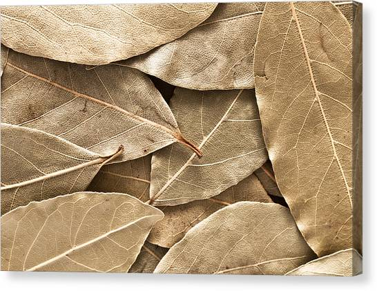 Condiments Canvas Print - Bay Leaves by Tom Gowanlock