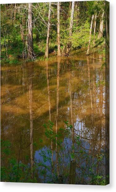 Bayou Reflections Canvas Print