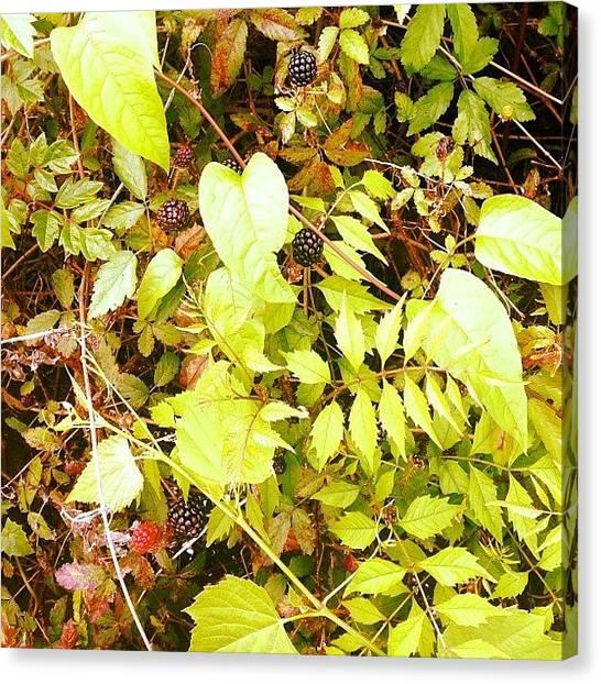 Bayous Canvas Print - #bayou by Tina Verret