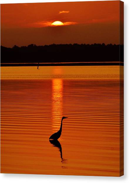 Bayside Ripples - A Heron Takes An Evening Stroll As The Sun Sets Behind The Clouds On The Bay Canvas Print