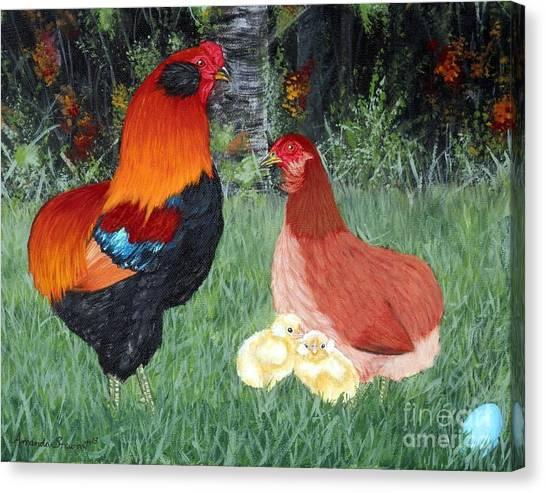 Bb Red Araucana Sop Canvas Print by Amanda Hukill