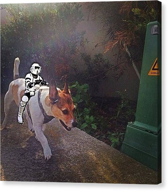Stormtrooper Canvas Print - #bbhames #buda And His #stormtrooper by Emily Hames