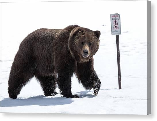 Bear Claws Canvas Print - Be Bear Aware by Sandy Sisti