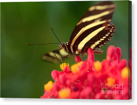 Canvas Print - Be Fly by Jared Shomo