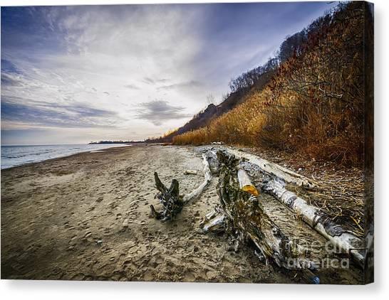 Sandy Desert Canvas Print - Beach At Scarborough Bluffs by Elena Elisseeva