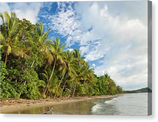 Tropical Rainforests Canvas Print - Beach, Cape Tribulation, Daintree by Peter Adams
