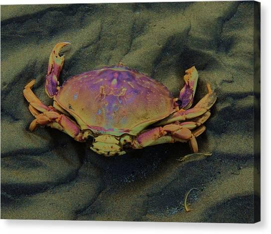 Beach Crab Canvas Print by Helen Carson
