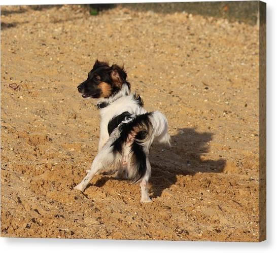Beach Dog Pose Canvas Print