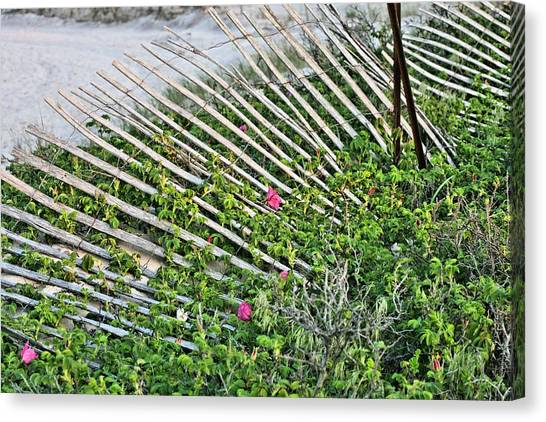 Beach Flowers Canvas Print by JC Findley