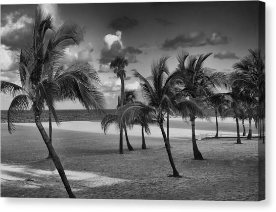 Beach Foliage Canvas Print