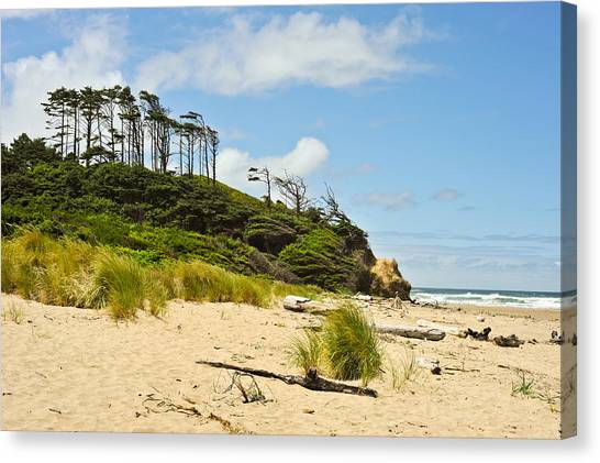 Beach Forest Canvas Print