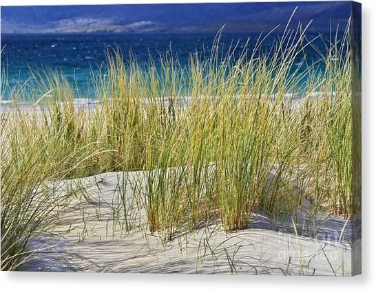 Beach Gras Canvas Print