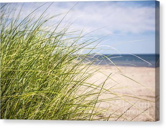 Prince Edward Island Canvas Print - Beach Grass by Elena Elisseeva