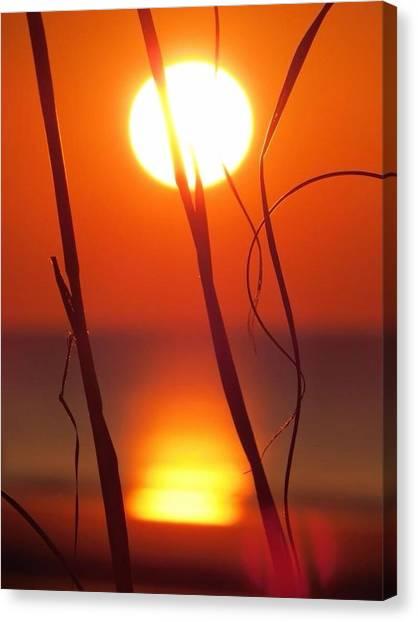 Beach Grass Sunrise Canvas Print