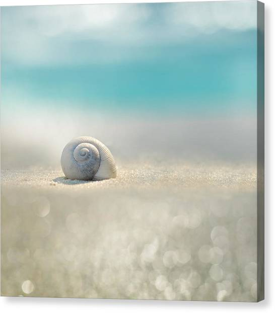 Seashells Canvas Print - Beach House by Laura Fasulo