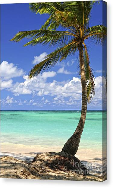Islands Canvas Print - Beach Of A Tropical Island by Elena Elisseeva