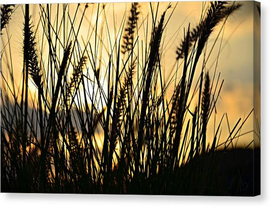 Seagrass Canvas Print - Beach Rise by Laura Fasulo