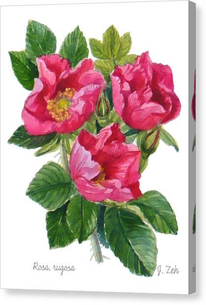 Beach Roses -  Rosa Rugosa Canvas Print