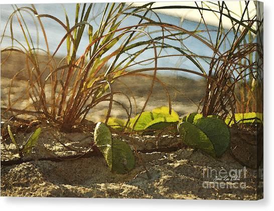 Beach Vine Canvas Print